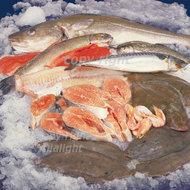 rauwe-vis-in-ijs